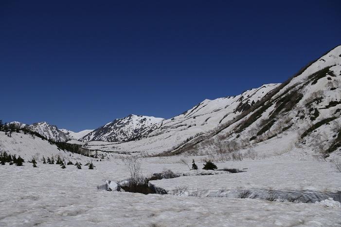 栂池自然園より白馬岳を望む