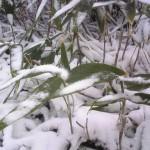 栂池で初雪