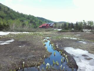 水ばしょう湿原