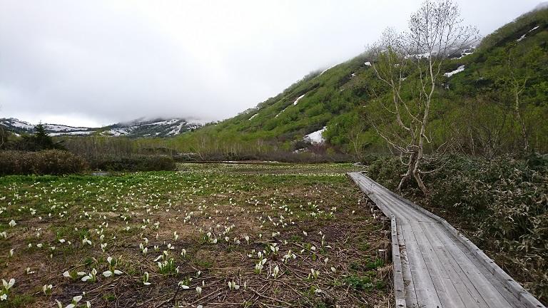 ミズバショウ湿原
